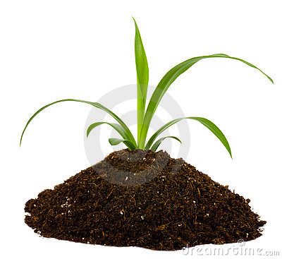 Free Black Earth And Green Plant Royalty Free Stock Image - 23825746