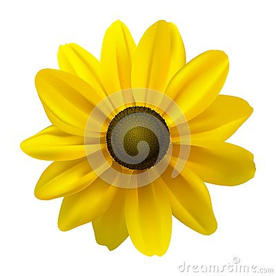 Free Black Eyed Susan (Rudbeckia Hirta) Flower Stock Image - 25528311