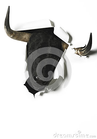 Free Black Fighting Bull Head Breaking A Blank Paper Stock Photo - 51364220