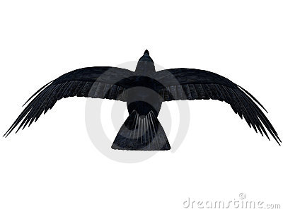 Black Flying Crow silhouette 300 dpi
