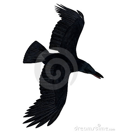 Black Flying Raven Silhouette 300 dpi