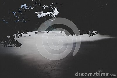 Black Forest Above Of Body Of Water Illustration Free Public Domain Cc0 Image