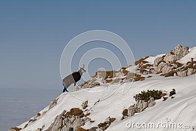 Black Goat, Piatra Craiului