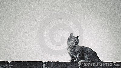 Black And Gray Tabby Cat On Concrete Block Free Public Domain Cc0 Image