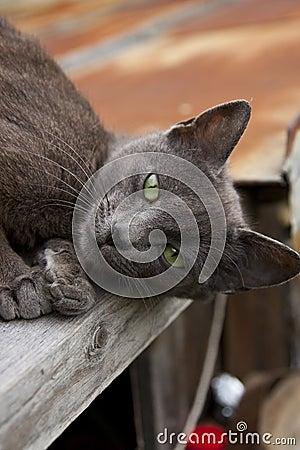 Free Black Green-eyed Cat Stock Photography - 14269692