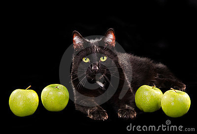 Black green-eyed cat among green apples