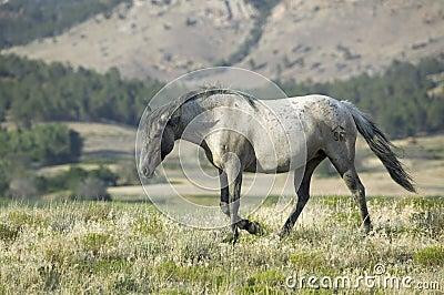Black Hills Wild Horse Sanctuary,