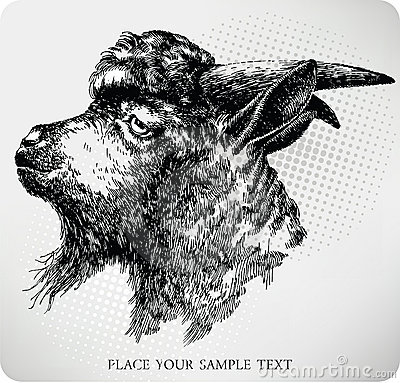 Black horned goat, hand-drawing