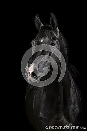 Black horse in darkness