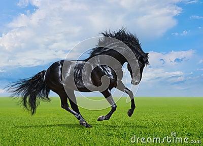 Black horse gallops on green field