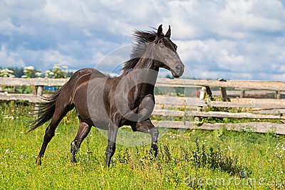 Black horse run