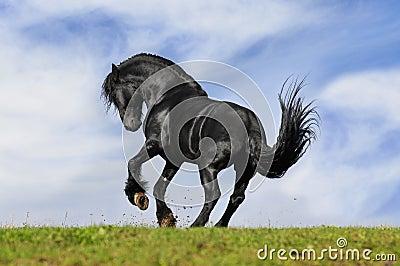 Black horse runs
