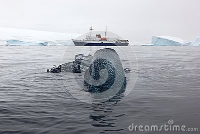 Black ice block with research boat in the background, Antarctica