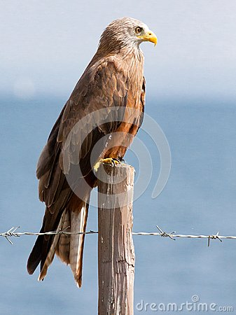 Free Black Kite Perched On A Fence Post Near Lake Stock Images - 108096854