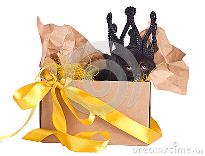 Black Kitten In A Crown Sitting In A Box Set Stock Image - Image: 25732501