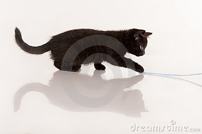 Black kitten playing with blue ribbon
