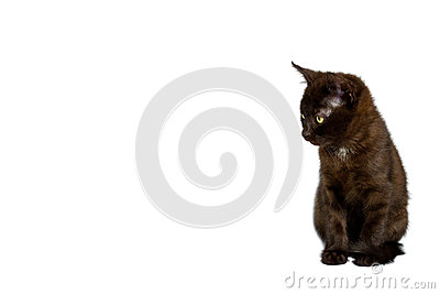 Black kitten white spot Stock Photo