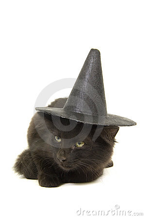 Black kitten with witch hat for halloween