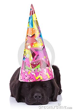 Free Black Labrador Retriever Puppy Dog Sleeping Royalty Free Stock Photos - 29955468