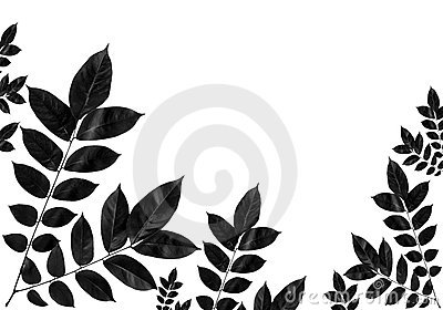 Black leaf isolated for background