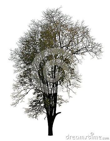 Free Black Leafless Tree Photo Silhouette On White Stock Photos - 104153433