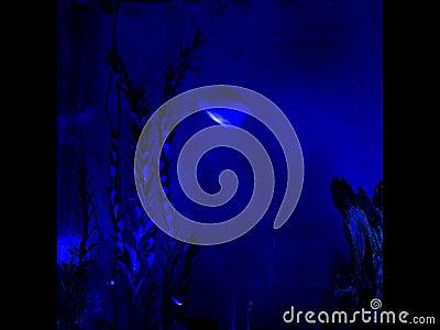 Black light fish tank time lapse stock footage video for Black light for fish tank