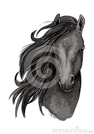 Free Black Mare Horse Head Sketch Stock Photography - 76903172