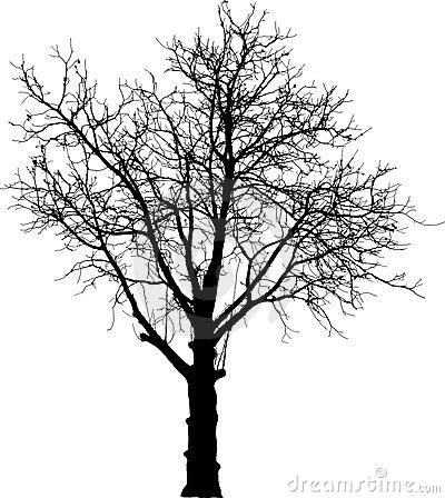 Black naked tree