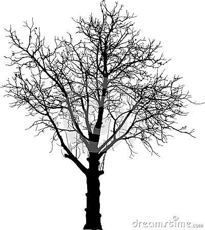 Free Black Naked Tree Royalty Free Stock Photography - 15006737