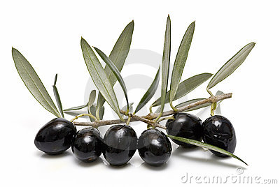 Black olives on the branch.