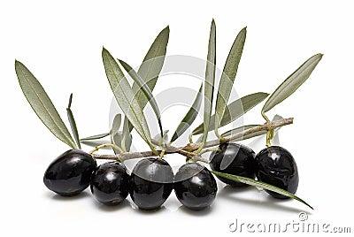 Black olives on the branch.