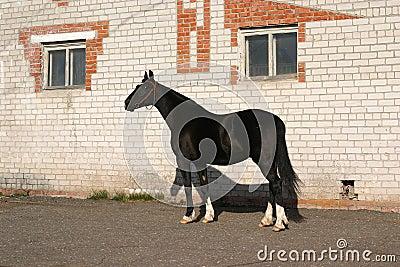 Black Orlov trotter