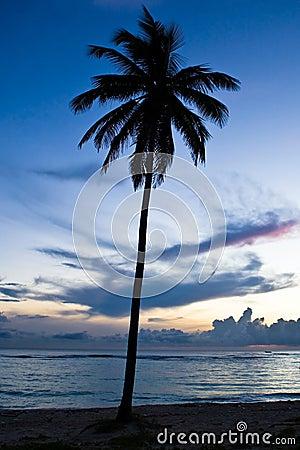 Black palm on night beach