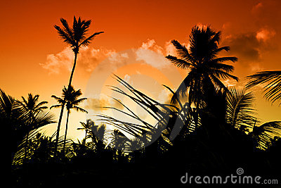 Black palm on night beach