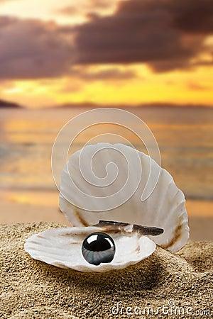 Free Black Pearl Royalty Free Stock Image - 11754536
