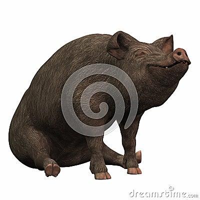 Black Piggie - 02