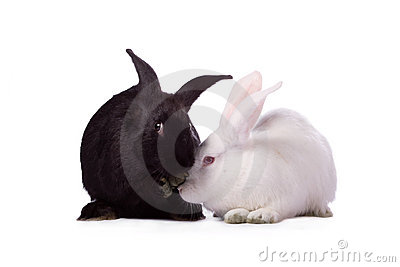 Black rabbit and white rabbit