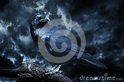 Black raven in moonlight perched on tree. Stock Photo
