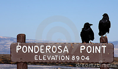 Black ravens on park sign