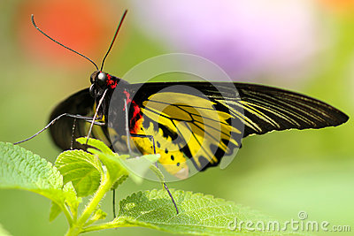 Black Red And Yellow Butterfly Perched On Green Leaf On Focus Photography Free Public Domain Cc0 Image