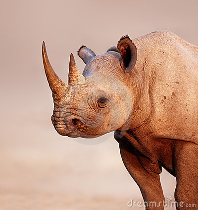 Free Black Rhinoceros Stock Image - 15144251