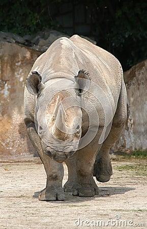 Free Black Rhinoceros Royalty Free Stock Photos - 354928