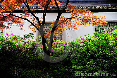 Black roof and white wall with colorful tree
