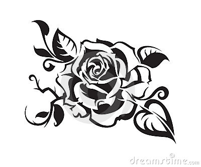 black rose royalty free stock photo image 15280875