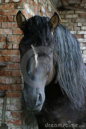 Free Black Russian Shire Horse Royalty Free Stock Photo - 227515