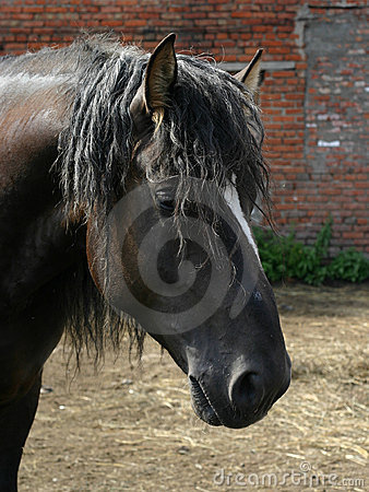 Free Black Russian Shire Horse Royalty Free Stock Image - 276196