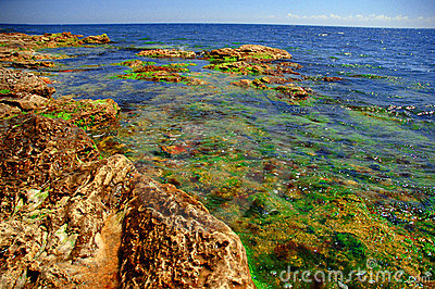 Black sea shore in colors #2
