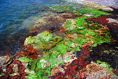 Black sea shore in colors #4