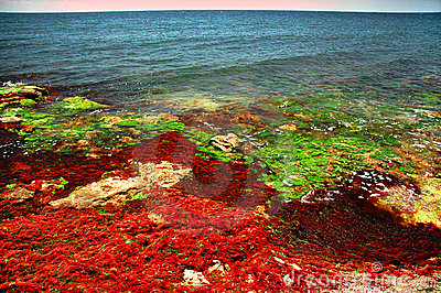 Black sea shore in colors #6