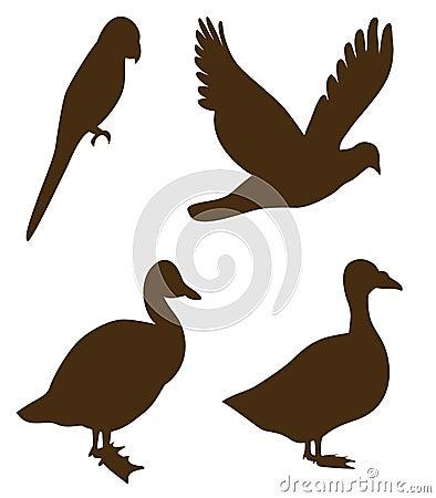 Black  shaped birds